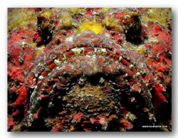 """""""BREATH-MINT CLOSE""""  Stone Fish Facial - Taken on compa... by Tim Ho"""