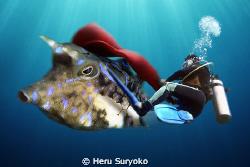 matador by Heru Suryoko