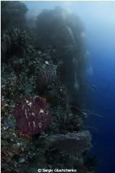 Small Island, small Diver... by Sergiy Glushchenko