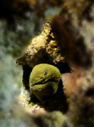 This Moray Eel is going UP! by Leon Joubert