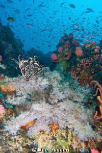 Purto Galera reef scene. by Ugo Gaggeri