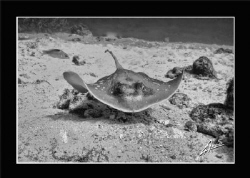 """under water """"stealth"""" by Adriano Trapani"""