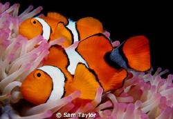 Nemo found a girlfriend....;) by Sam Taylor