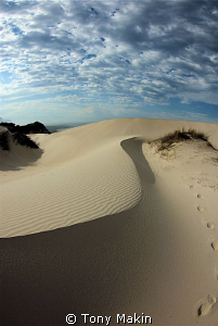 Dunes on Betties Bay beach by Tony Makin