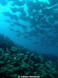 Last Point of Baja Peninsula sur, blue water, millions of... by Adriana Manjarrez