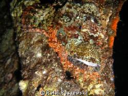 Camouflage - Night dive,Bluff Point by Rafal Raszewski