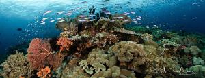 Reef panorama by Julian Cohen