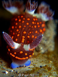 Nudi on top a beer can resting. by Paul Ng