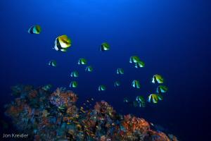 bannerfish... by Jon Kreider
