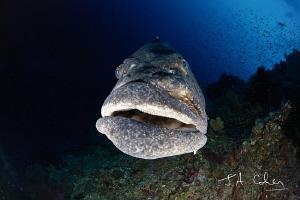 Potato Cod by Julian Cohen