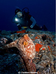 Big octopus and my wife