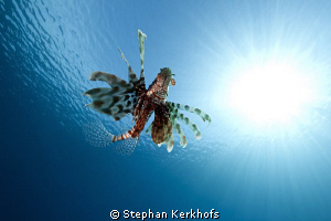 Lucky to have caught this Lionfish away from the reef! by Stephan Kerkhofs