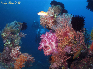 Tulamben shipweck - Bali Canon G9 + Nikonos SB 105 + Big... by Andy Chan