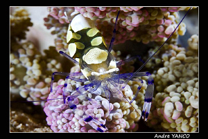 Tiny yet full of color...  Shot in Mabul.  Nikon D200+ Ni... by Andre Yanco