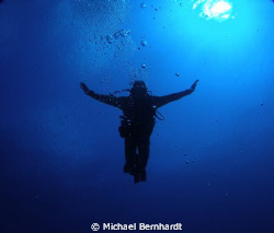 the dive goddess  arrives by Michael Bernhardt