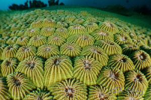 Brain Coral by Julian Cohen