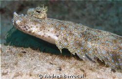 Flounder!! by Andres Berrocal