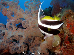 Bannor fish by Stuart Ganz