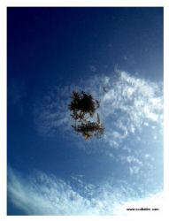 The sky from a fish's eye - Shot on compact camera. by Tim Ho
