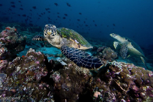 it should have been turtle thila that day... by Jon Kreider