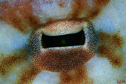 Octopus eye. This guy was walking around the reef trying ... by Arthur Telle Thiemann
