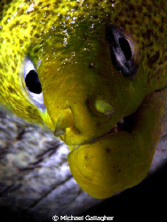 Moray portrait, Red Sea by Michael Gallagher