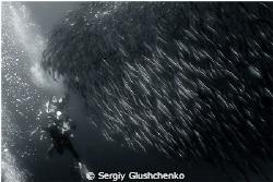 Sardine Run, Bait Ball by Sergiy Glushchenko