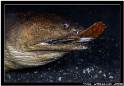 Yum yum that was good !!!..... Canon 350D/70mm by Yves Antoniazzo