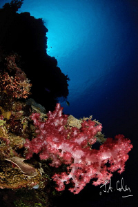 Soft Coral by Julian Cohen