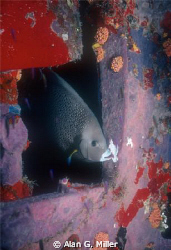 Angelfish leaving a wreck, Nikonos RS, 50 mm and 2 Ikelit... by Alan G. Miller
