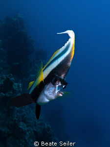 Bannerfish , taken with Canon G10 at El Quadim by Beate Seiler