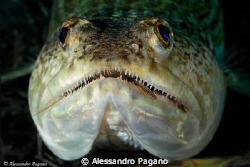 Smile! A big Synodus saurus in ambush, surprised at abou... by Alessandro Pagano