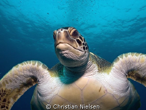 Mr Wrinkle, He came close, so even with the 14 mm, he qu... by Christian Nielsen