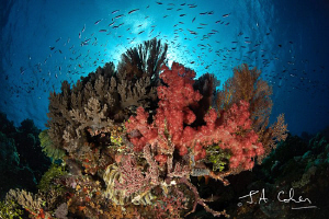 Soft Coral by Julian Cohen
