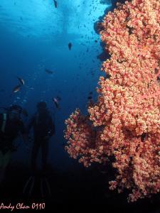 Buddy Tulamben Shipwreck - Bali by Andy Chan