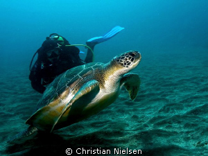 Take off ! Another friendly green turtle with a friendly... by Christian Nielsen
