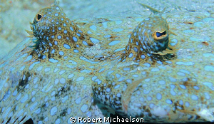 Fortunate to find a spot below a peacock flounder to get ... by Robert Michaelson