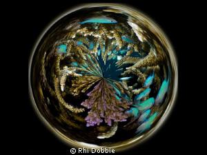 A crystal ball of Staghorn Coral. G9, Ikelite Housing, I... by Rhi Dobbie