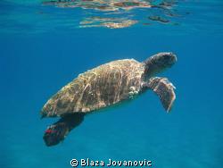 Loggerhead sea turtle in waters of Zakynthos, Greece; can... by Blaza Jovanovic