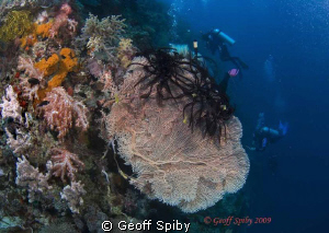 gorgonian fan and divers on the wall by Geoff Spiby
