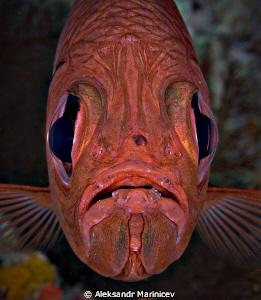 """Faces of Death"" Common bigeye fish Cannon 1Ds MarkII w... by Aleksandr Marinicev"