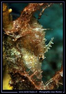 A small Lime Fish hidding... Que du bonheur... :O)... by Michel Lonfat