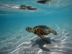 Turtle over sand by Stuart Ganz