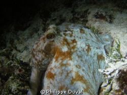 Night dive from Xpuha, mexico. by Philippe Duval