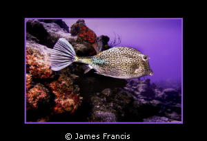 this is one of the frist photographs I took when a became... by James Francis