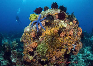 colourful reef, Apo island by Geoff Spiby