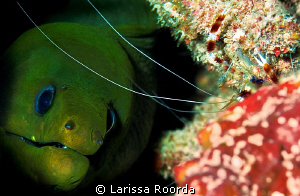 """YES, THAT'S MY BUDDY!"".   Moray awaiting his cleaning. by Larissa Roorda"