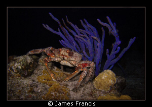 When I night dive in Cozumel I always see these big coral... by James Francis