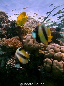 Reef Scene at El Quadim by Beate Seiler