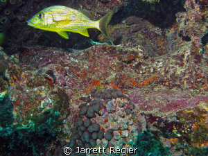 Key Largo-Molasses Reef by Jarrett Regier